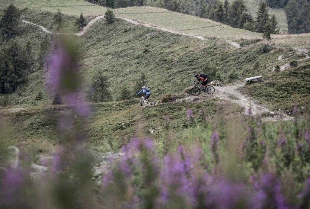 Koningstrail - trail