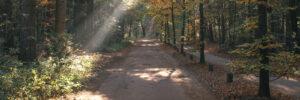 Route Biesbosch